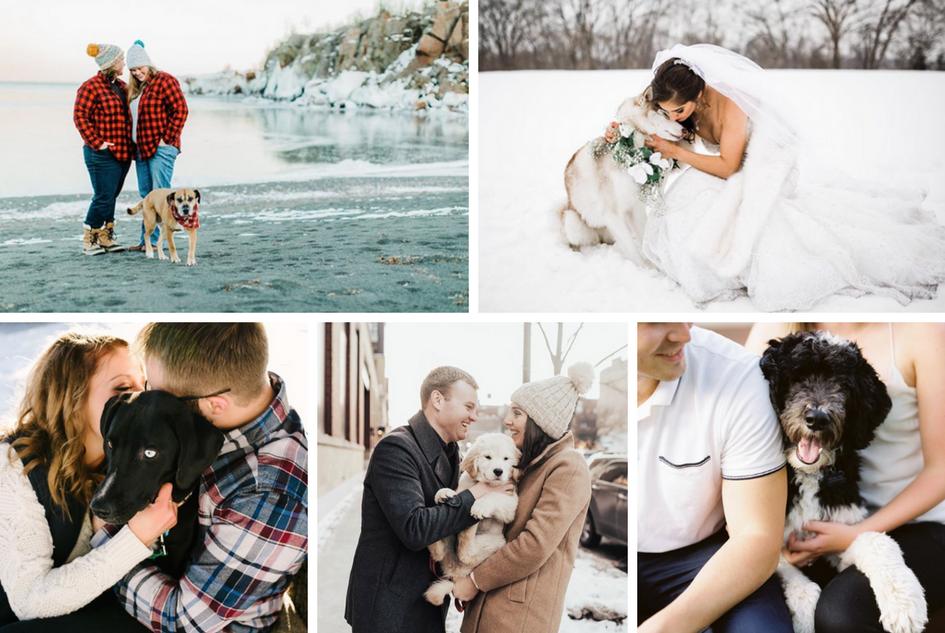 Dogs of Instagram - Minnesota