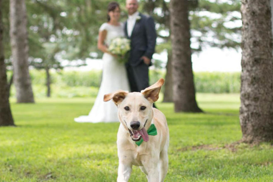 Minnesota Wedding Dogs