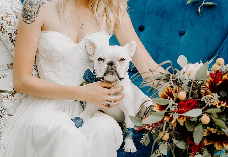 Doggy Social MN Weddings