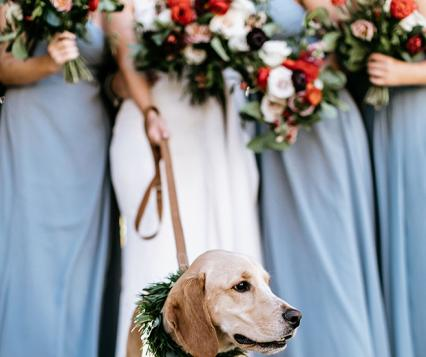 Doggy Social MN Weddings
