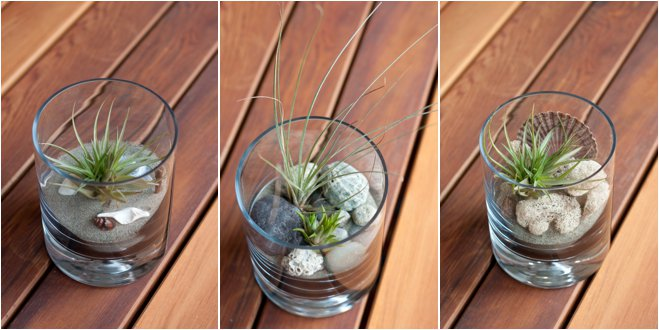Green centerpiece ideas air plant terrariums california for Air plant holder ideas